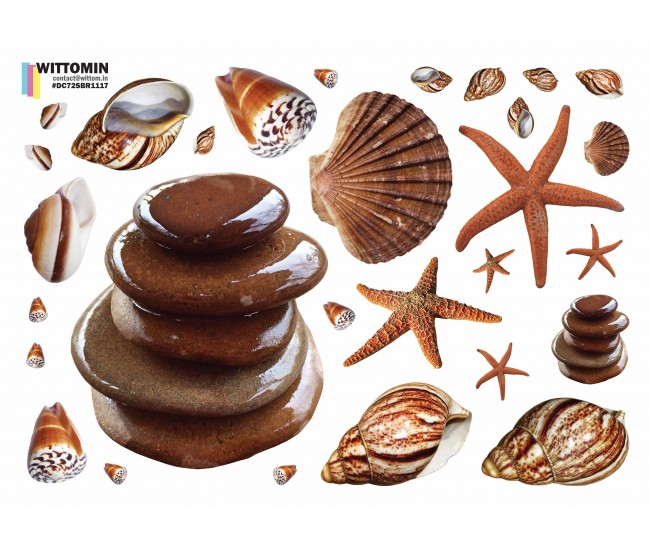 Shells and stones